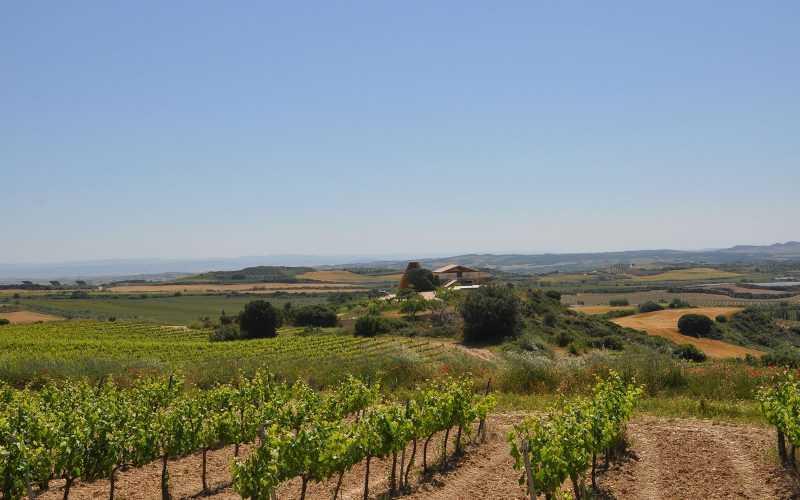 Wine Tour Pamplona