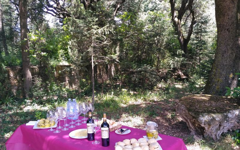 Wine Tour Picnic